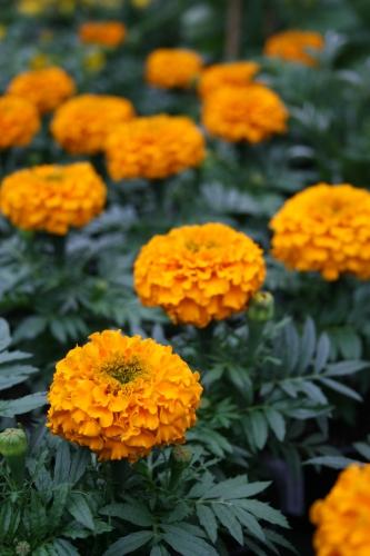 Beet Und Balkonpflanzen Von Blumen Reim